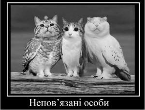cat_ch